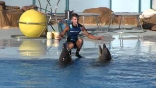 Dolphin Show Hurghada 2011