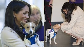 How does Meghan Markle help to find a new home to adorable dog at the Mayhew animal charity?