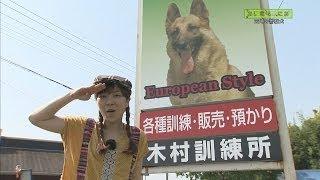 《あにまるまにあ》 2014年6月17日OA 吉丸探偵が宮崎の警察犬...