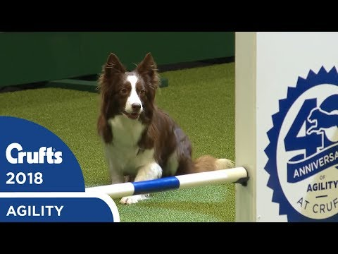 Agility - Crufts Singles Heat - S/M/L (Agility) Part 1 | Crufts 2018