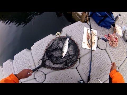 Shore Fishing - Float Fishing For Grey Mullet Using Mackerel As Bait