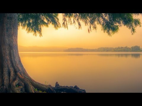 """Peaceful Music, Relaxing Instrumental Music, Study Spa music """"Trees of Life"""" by Tim Janis"""