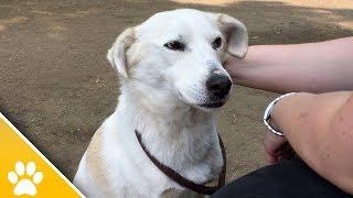 MiezWohnung gesucht Folge 25 | Tierheim Solingen: Diese Tiere suchen ein neues Zuhause