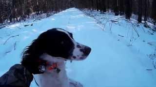 Rabbit Hunting Canada. Охота на кролика в Канаде.