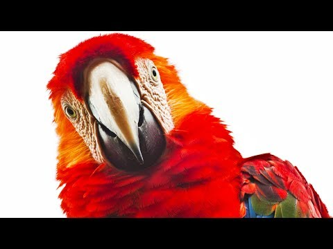 FUNNY PARROTS 2017 🐦 Parrots Dancing and Playing [Funny Pets]