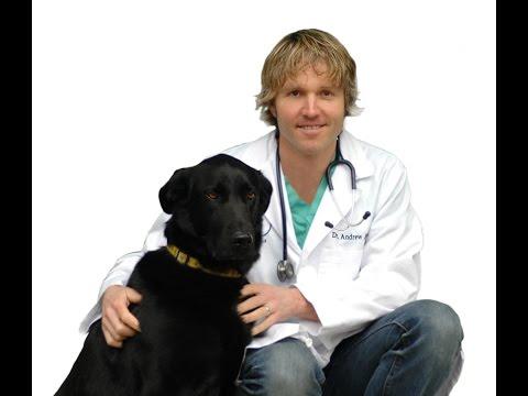 Top 10 Pet Diseases and Natural Remedies
