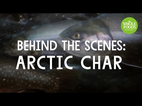 Behind The Scenes: Arctic Char | Stories From The Field | Whole Foods Market