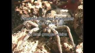 Les araignées de France