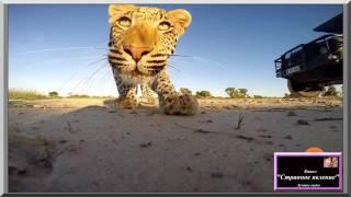 Забавное видео с животными. Лучшая подборка про животных. Животные Африки