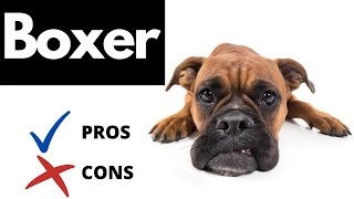 Boxer Dog Pros And Cons | The Good AND The Bad!!
