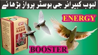HOW TO INCREASE PIGEONS ENERGY AND FLYING RATE WITH LABUB KABEER  IN URDU / HINDI