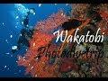 Wakatobi Dive Trip I Photodivetrip