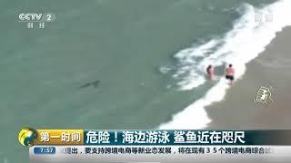[第一时间]危险!海边游泳 鲨鱼近在咫尺  CCTV财经