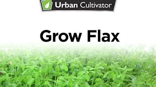 How To Grow Flax Indoors | Urban Cultivator
