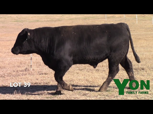 Yon Family Farms Lot 39