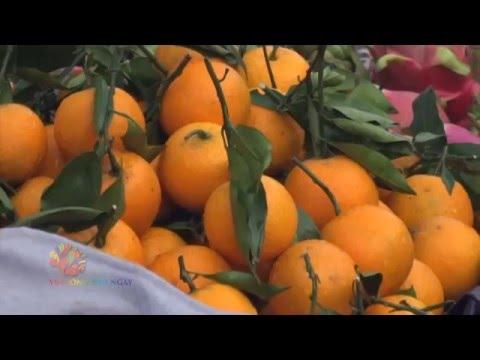 Nhận biết thực phẩm tẩm hóa chất – Vui Sống Mỗi Ngày [VTV3 – 09.12.2015]
