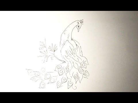 Вопрос: Как нарисовать экзотического павлина?