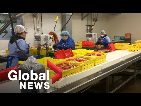 Coronavirus outbreak: Dozens of meat inspectors in Canada test positive for COVID-19