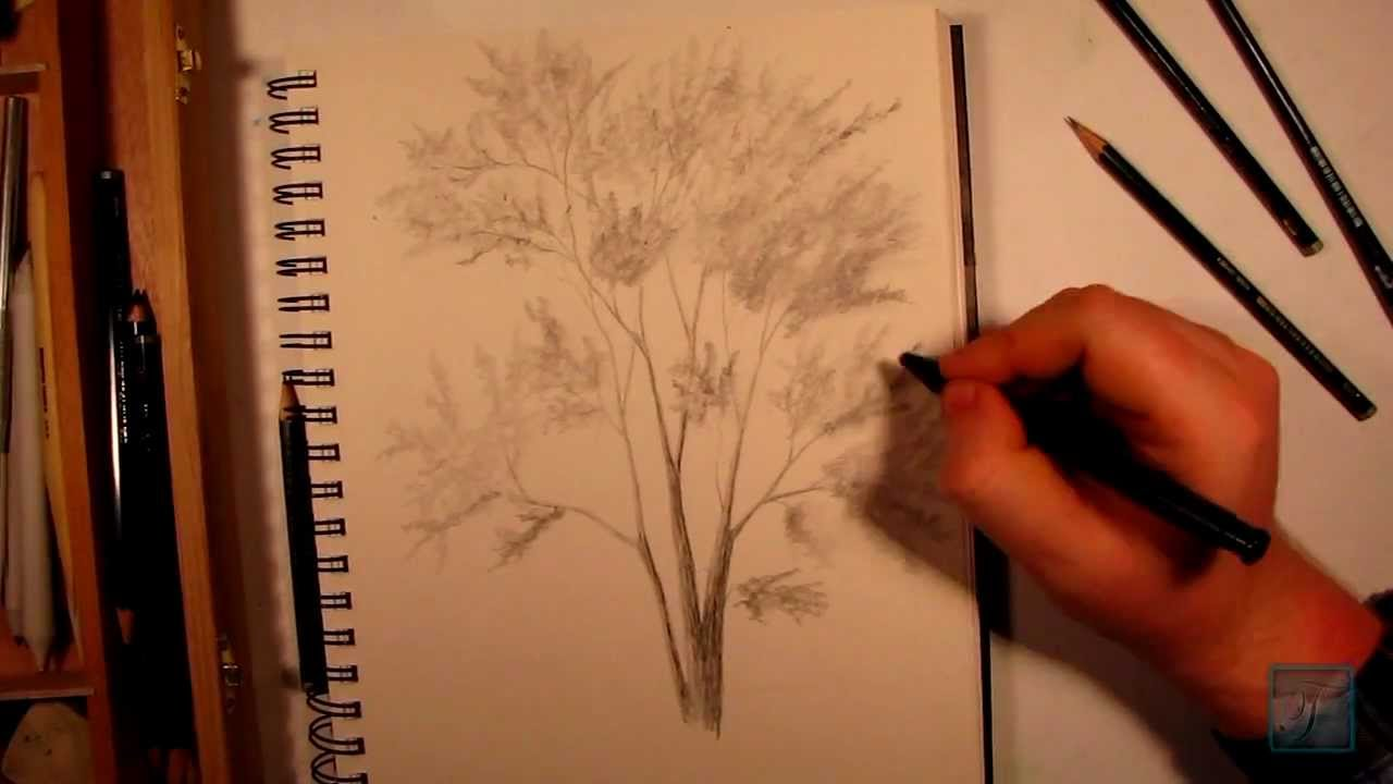 how to draw a realistic tree youtube. Black Bedroom Furniture Sets. Home Design Ideas