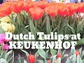 Keukenhof  the best video experience  Dutch Tulips and Flowers