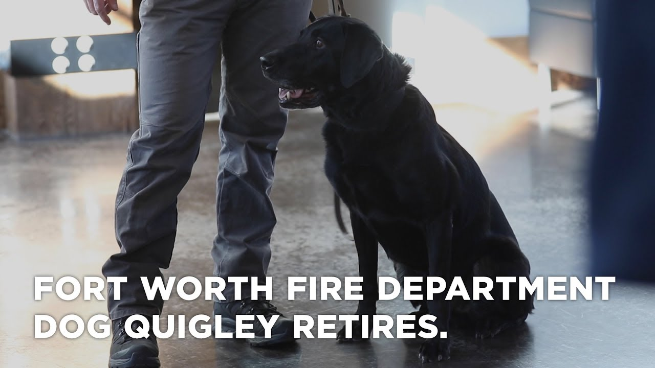 Fort Worth Fire Department dog Quigley retires
