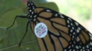 14 Facts About Monarch Butterflies