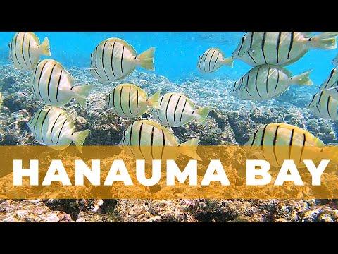 Hanauma Bay Snorkeling Experience | Oahu, Hawaii