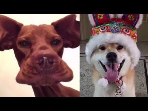 Se und Lustige Tiere! 2018  Lustige Tiere zum Totlachen! vol.11  Funny DuTube