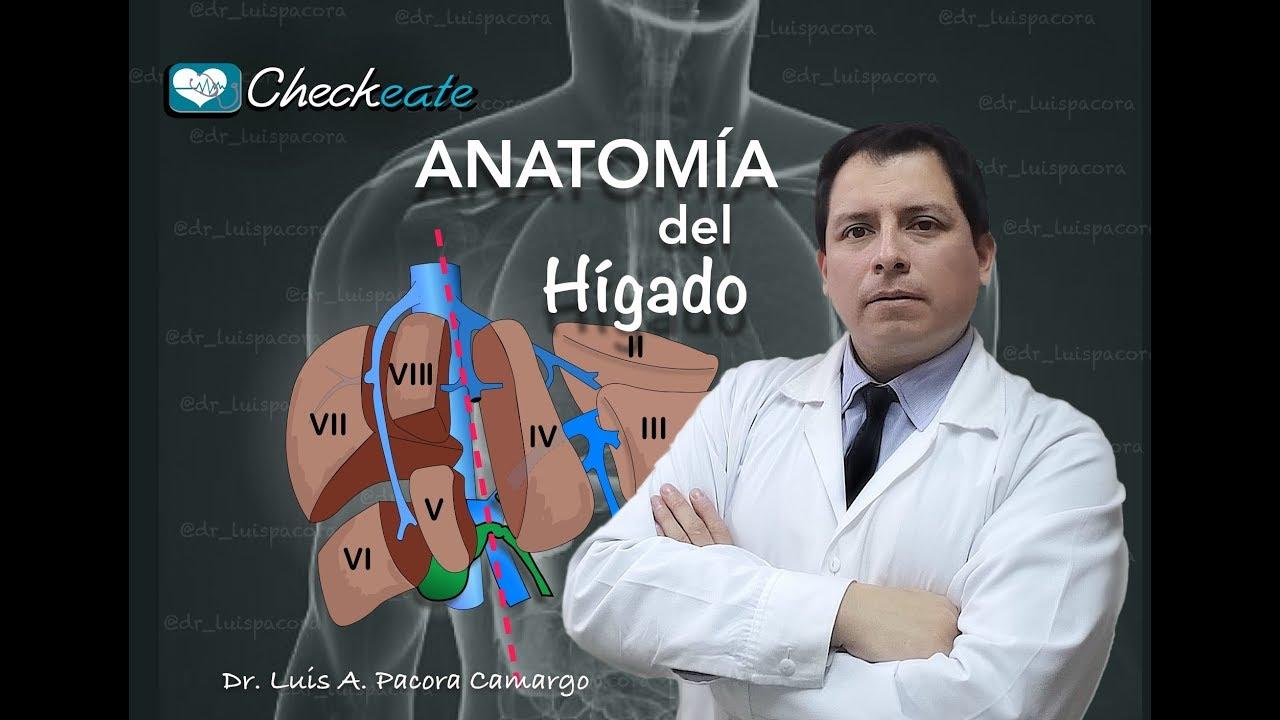 Anatomia hepatica - YouTube