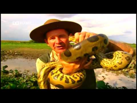 Zenja e gjarprinjeve nga ekspert te kesaj fushe (Tring Planet)