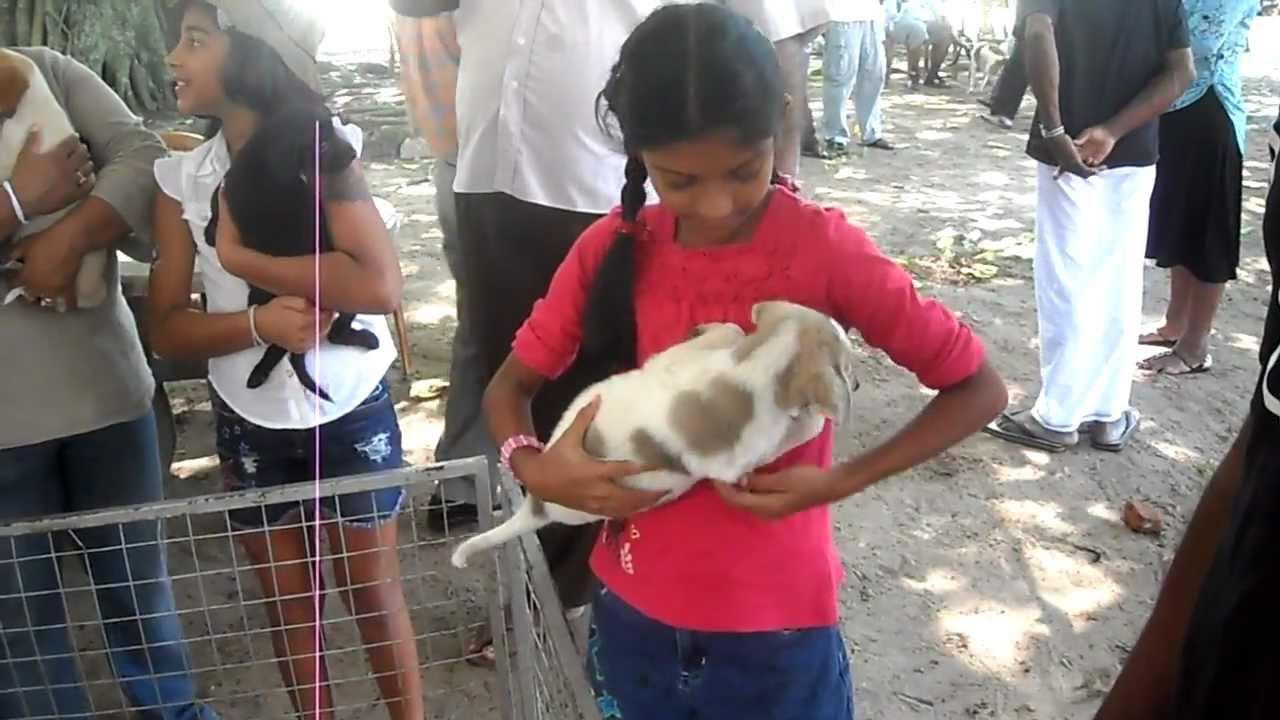 Dog Show In Sri Lanka Youtube