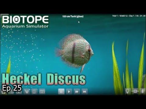 Biotope Aquarium Simulator - Biggus Discus  