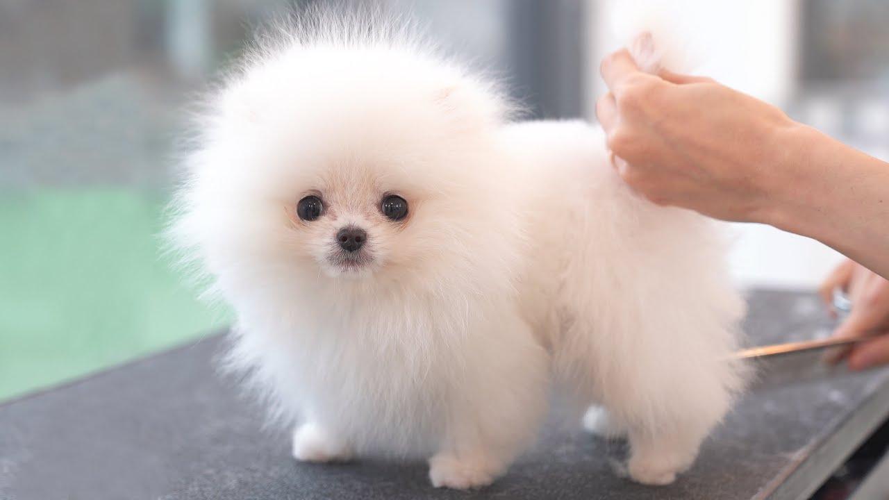 สุนัข ที่น่ารักที่สุดในโลก