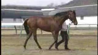 バブル(ジェントルスマイル2006、父バブルガムフェロー)