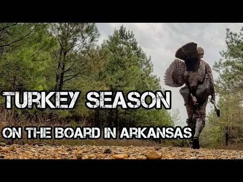 Finally a turkey down in Arkansas!