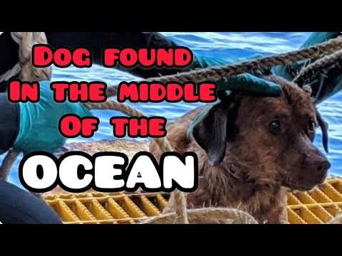 Poor Dog Survives the Open Ocean All Alone. Boonrod | Animal Rescue from YouTube · Duration:  1 minutes 4 seconds