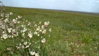Фильм  Про  районы Калмыкии