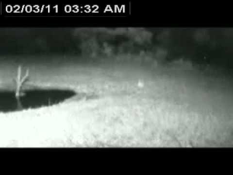 Alarm call of baboon; Feb 3 2011 3:32AM SAST