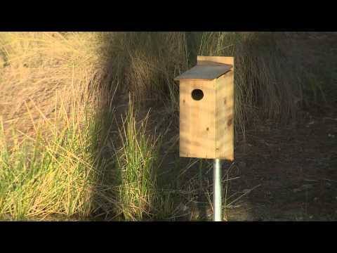 Par 5: Five steps to creating a habitat for the wood duck