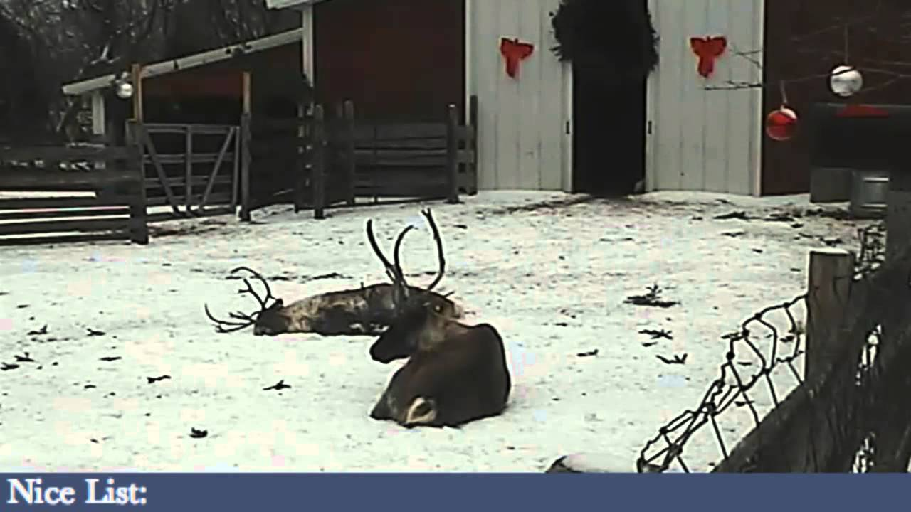 Reindeercam live stream youtube