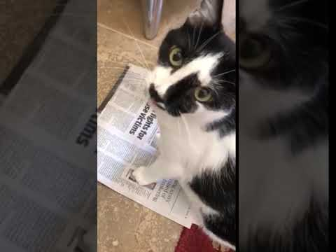 The Mo & Sally Show - Turk Reads The Newspaper