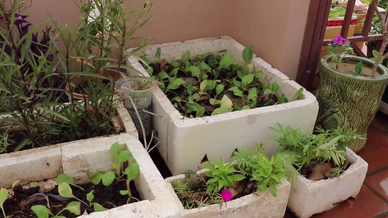 plant adaptation flower arrangement and ve able container gardening on flat roof