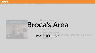 Broca's Area | Psychology | Chegg Tutors