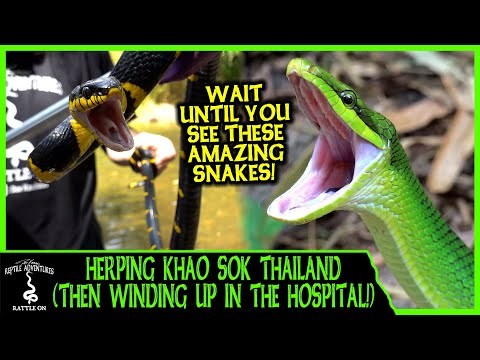 HERPING KHAO SOK THAILAND (Then winding up in the hospital) - Adventures in THAILAND (2020)