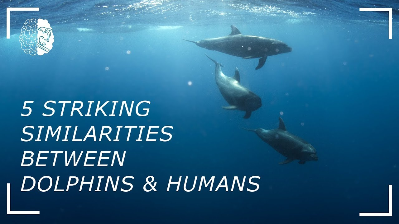 similarities between dolphins and humans