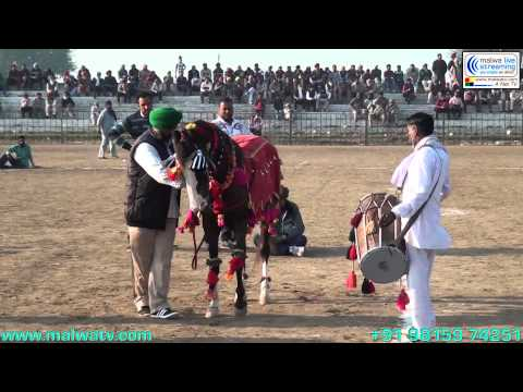 GUJJARWAL (Ludhiana) Sports - 2014 (Hourse Races)