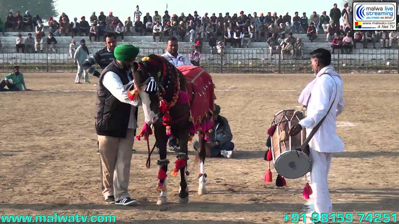 GUJJARWAL (Ludhiana) Sports - 2014 (Hourse Races)