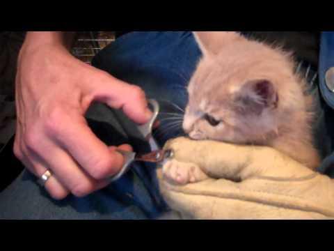 holdout boy...   feral kitten update....  he's not happy