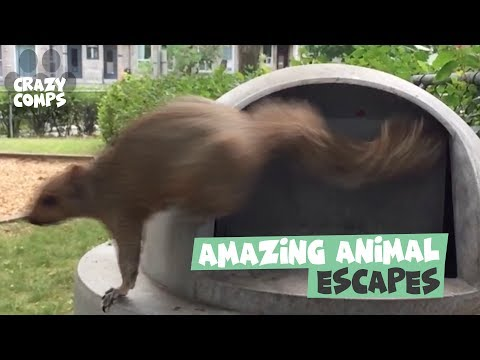 The Great Escape | Amazing Animal Escapes and Getaways