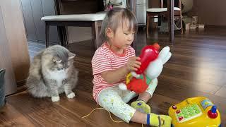 隙を見てモフられる猫 ノルウェージャンフォレストキャットA cat that you can touch as much as you want if the timing is right.